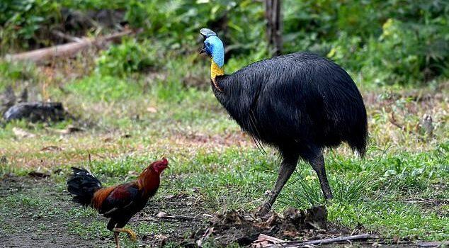أخطر طائر في العالم يقتل مالكه في الولايات المتحدة